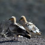 Día Mundial de las Aves Migratorias (DMAM)