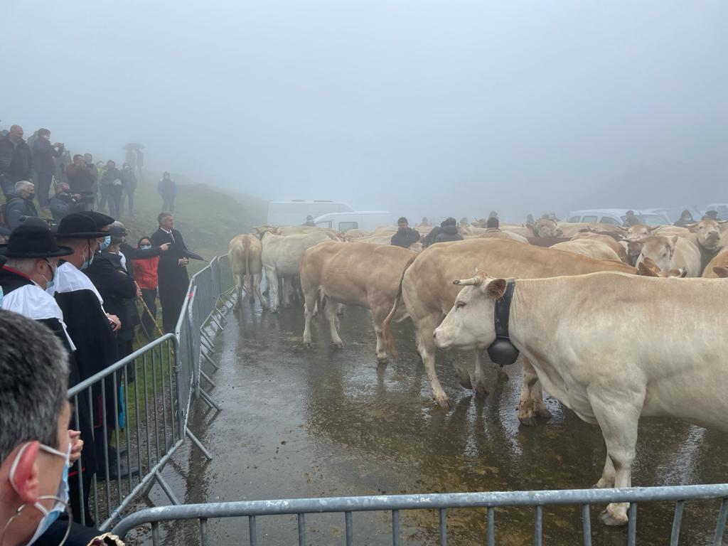 Tributo de las Tres Vacas